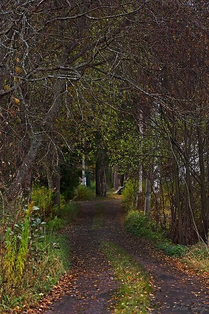 autumn_roads_22