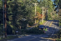 Bainbridge Island wind damage