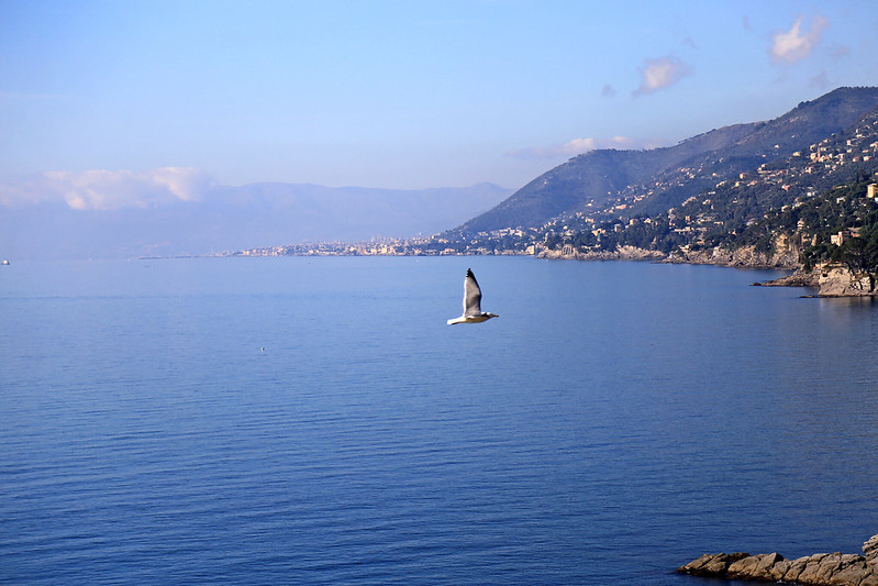 camogli-seagull-flying-over-the-sea