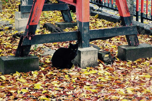 Today's Cat@2016-11-23