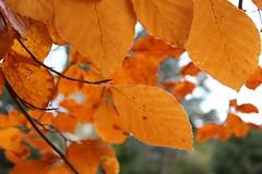 beautiful colour autumn leaves