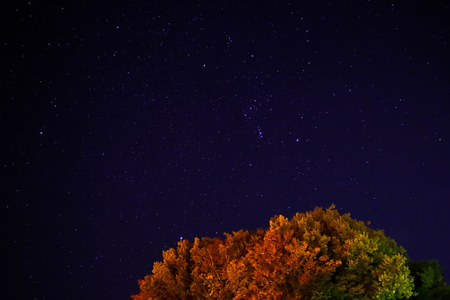 Stars, Red and yellow leaves.