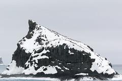 img_3048 Elephant Island 1855