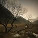 Achtriochtan trees. by Scott Robertson (Roksoff)