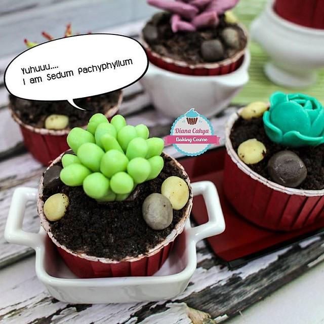 Yuhuuu.... I am Sedum Pachyphyllum  #Succulent #EcheveriaGoldenGlow #Cupcakes #Chocolate100% #NoFondant #Edible #DianaCahya #BakingTutorial #BakingClass #DianaCahyaBakingCourse #DeliciousChocolate #DeliciousChocoSucculentCupcake