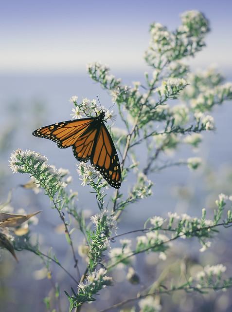 Hola mariposa