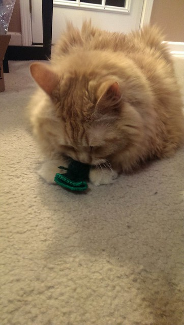 Jasper with his new nip toy.