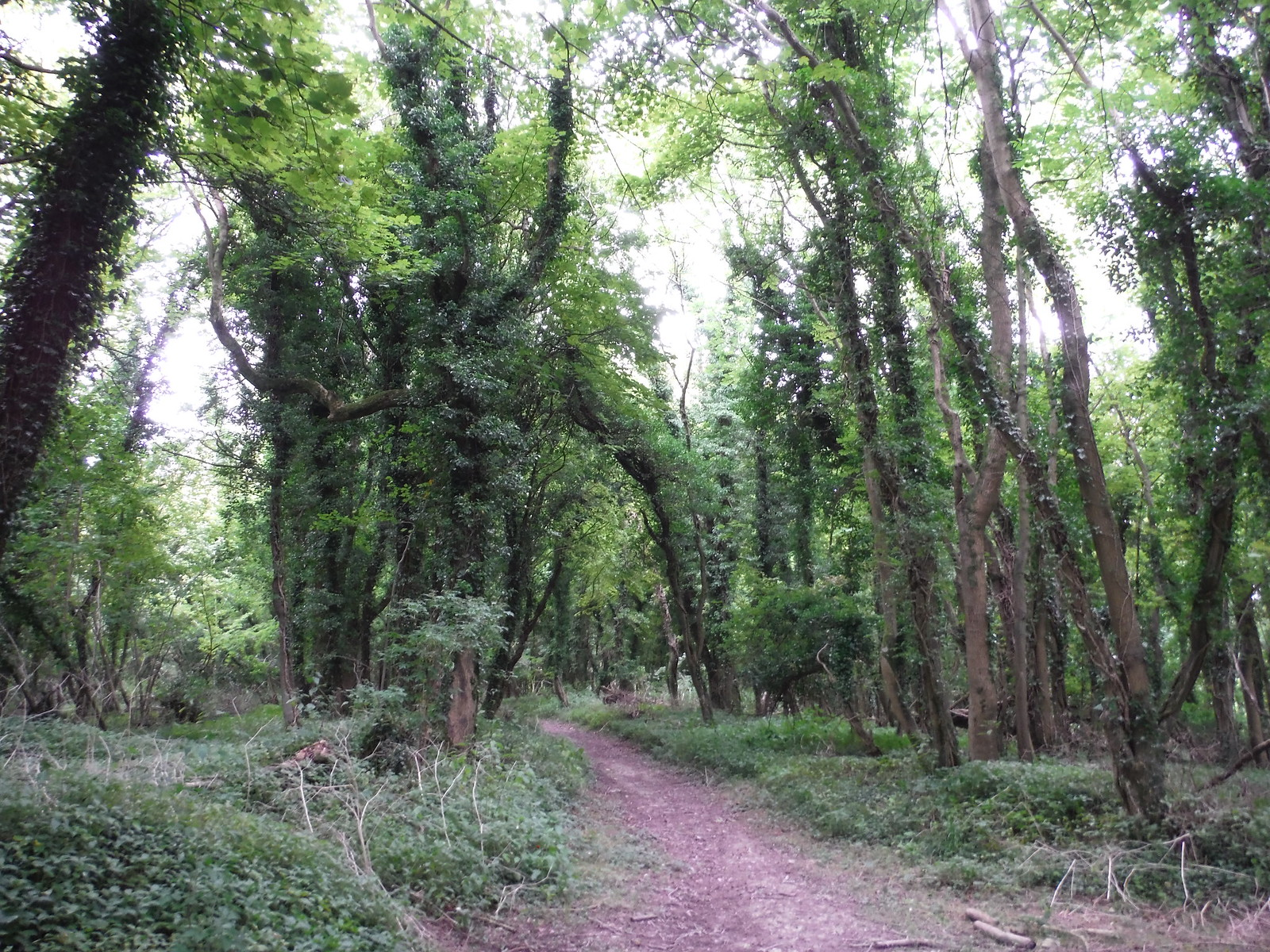 Elliot's Shed Wood SWC Walk 251 Tisbury Circular via Ludwell and Berwick St. John