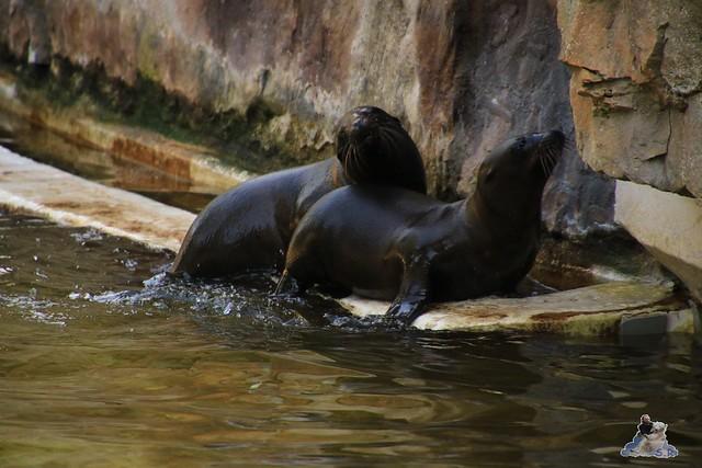 Zoo Berlin 14.08.2015  043