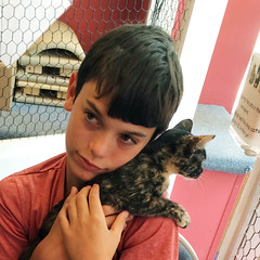 adopt a cat: zen and her boy