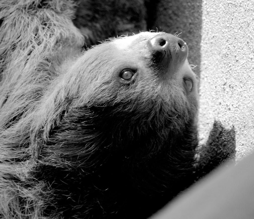 Sloth_3