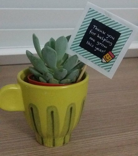 A potted small potted plant in a cup, with a meaningful note.