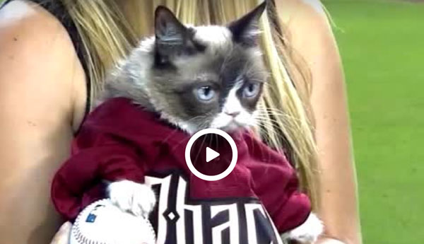 grumpy-cat-first-pitch
