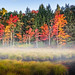 The Beauty of Fall* by Simmie   Reagor - Simmulated.com