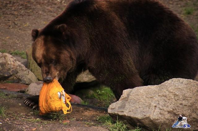 Tierpark Hagenbeck 27.09.2015 034