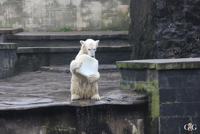 Besuch Zoo Rostock 17.10.201575
