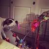 Puppy playground #dogsofinstagram #muttsofinstagram #fannypup
