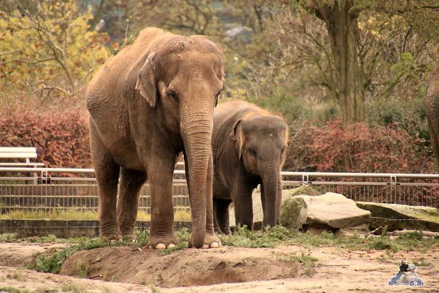 Tierpark Berlin 07.11.2015  0159