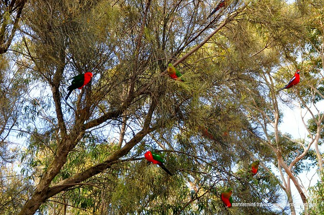 Native Birds at Point Hawdon Kennet River