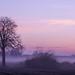 Mist by Truus