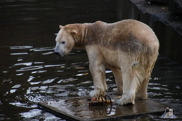 Tierpark Berlin 25.12.2051   4