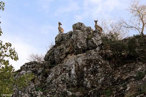 Vigilantes de su entorno