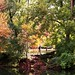 Samuel Forsyth- Varsity Pond