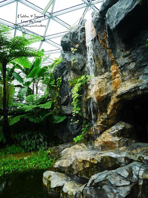 日本東京景點新宿御苑溫室植物 (22)