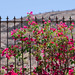 Fence & Flowers by gepixelt
