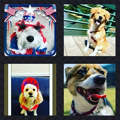 There's still time to vote for your favorite pup! Go to our Valley Ranch Association Facebook page to cast your vote! #HauteDogsofValleyRanch #HauteDogs #ValleyRanch #OnlyinValleyRanch #Irving #Texas #Dogs #WeLoveDogs #Pups #Canines #FourLeggedFriends