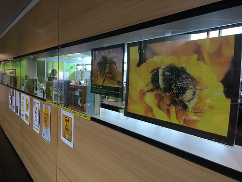 Bee posters.