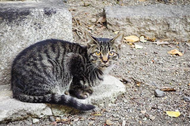 Today's Cat@2015-10-11
