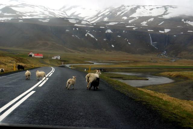 Islandia - D2 (59) Snæfellsness