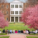 WFUcampuspinktrees