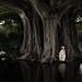 tree-home by laura zalenga