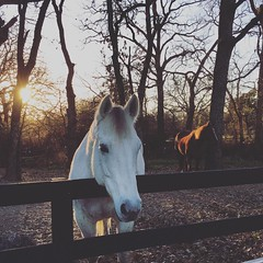 #winter#nature#outdoors#horses#petsofinstagram#horse#texas#texassunset#sunset#forest#woods#instamood#instadaily#instalike#instalove#instagood#travel#dallas#dfw#tx#fall#autumn#western