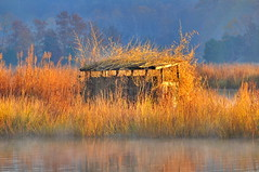 Duck Blind along the Port Tobacco River