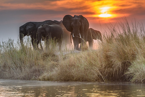 Chobe Afternoon