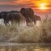 Chobe Afternoon by Duncan Blackburn
