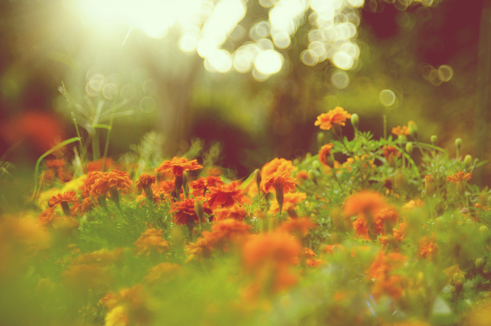 Day 263.365 - Marigold