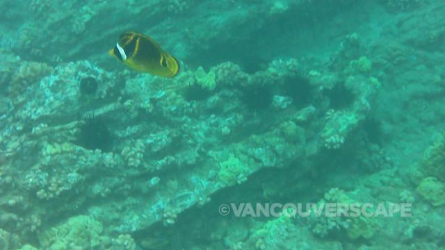 Molokini snorkel, Maui