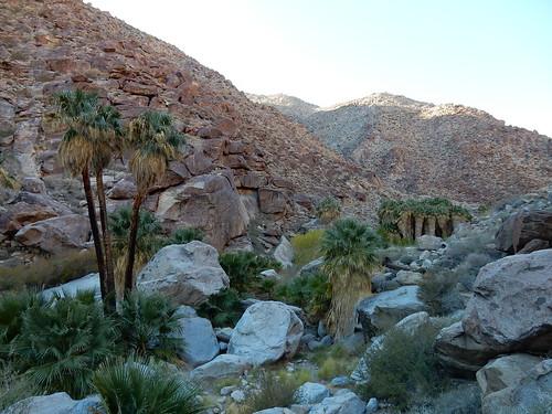 Borrego Palm Canyon Trail - oase - 1