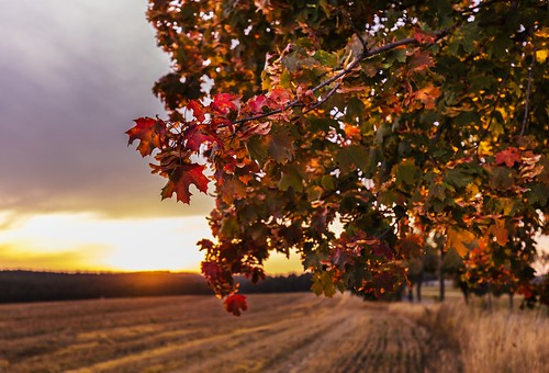 field autumn leave leaves red yellow orange czech moravian trees tree sunset sunlight sun sky season scene rural reeds outdoors nature natural meadow landscape green grass forest evening colorful cloudy blue beauty beautiful wonderful