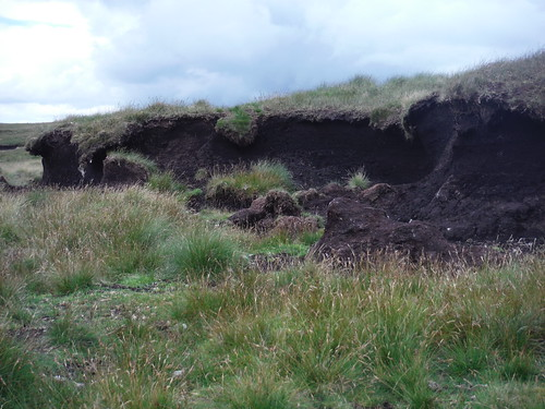 Upland Peat Bog along the Extension