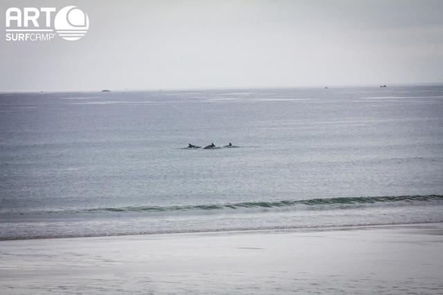 coohuco surf 27