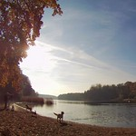 As autumn takes a few last gasps, I wish to press the pause button on the season. But that would deny the beauty of the turn. Taken on the shore of Grunewaldsee -- Berlin, Germany