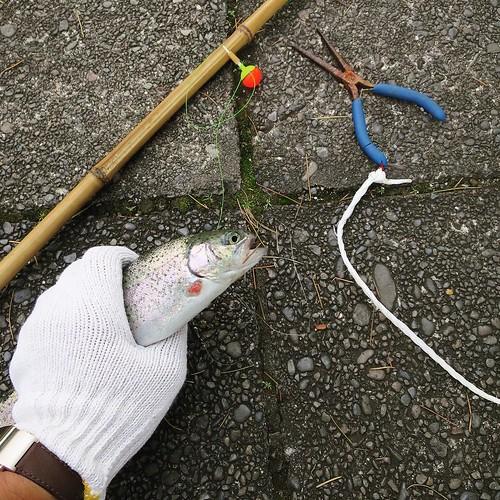 ねんざさんが釣った魚を見てたら、なんかオレも釣れてた。多分、生まれて初めて魚を釣ったぞ。 #としまえん #魚釣り #釣果 #針どう取るの?