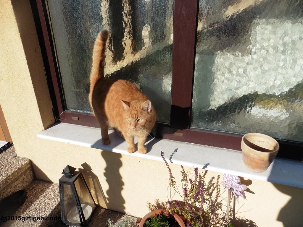Garfield im Sonnenlicht