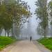 Fog in Lisbon