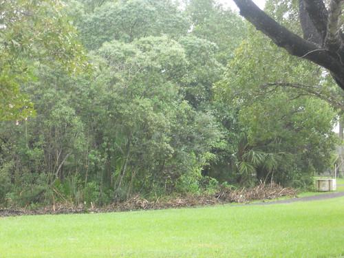 FIU Nature Preserve & Organic Garden